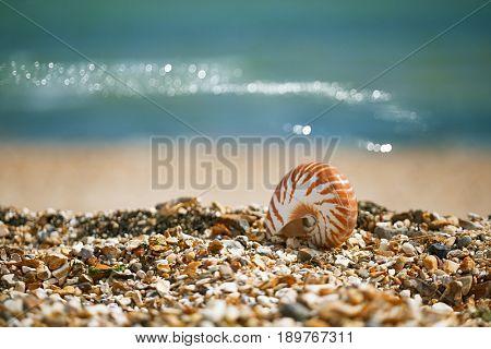 Great British summer pebble beach with nautilus pompilius sea shell