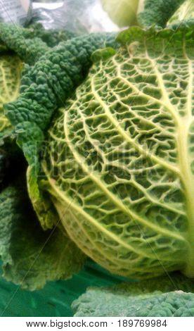 Cerebro verde, cada quien escoge de que se alimenta.