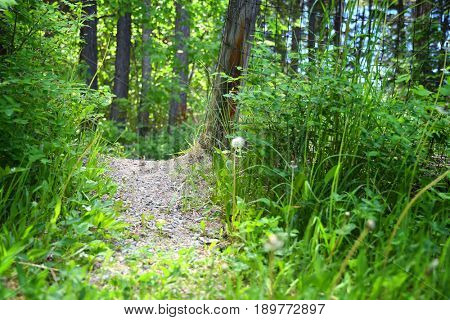 Gravel path leads through a fence in the forest