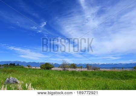 Grassy meadow with the Swan Mountain Range in the background