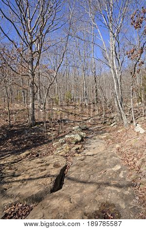Rocky Trail Through a Winter Forest in Devils Den State Park in Arkansas