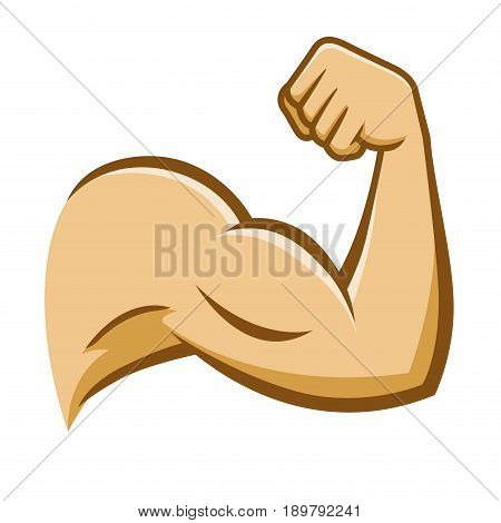 Vector stock of a strong muscular arm on a white background
