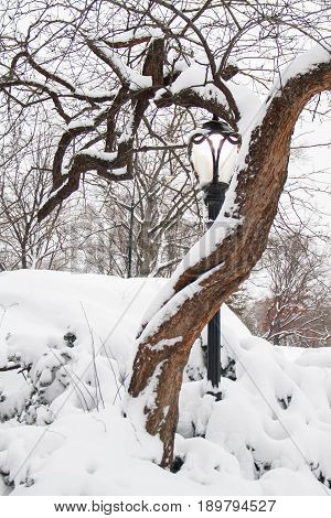 Light pole behind the tree with snow