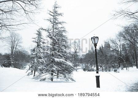 Tree and light pole with snow at Central Park in vintage style