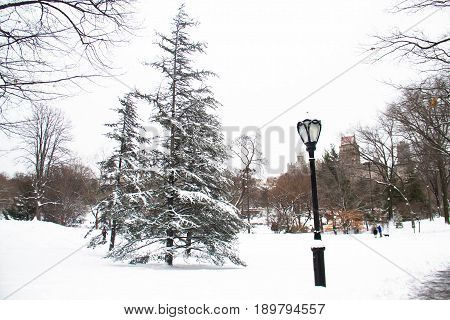 Tree and light pole with snow at Central Park