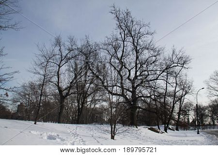 Snow, light pole and trees without leaves in winter