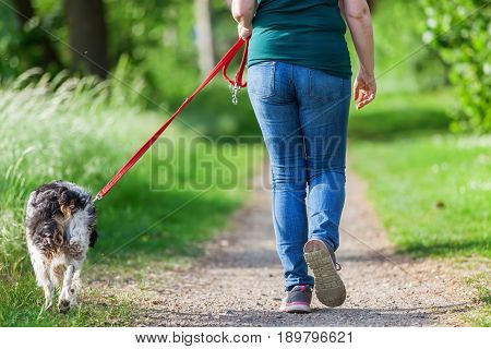 Mature Woman With Brittany Dog At The Leash