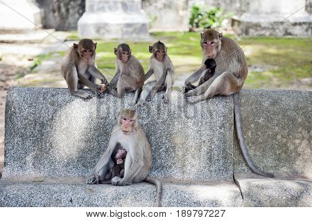 Group Of Monkeys At Ku Phra Kona Temple In Roi Et Province, Northeastern Thailand