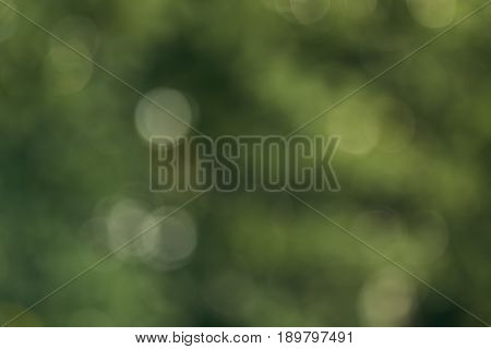 Bokeh Background Of The Summer Forest