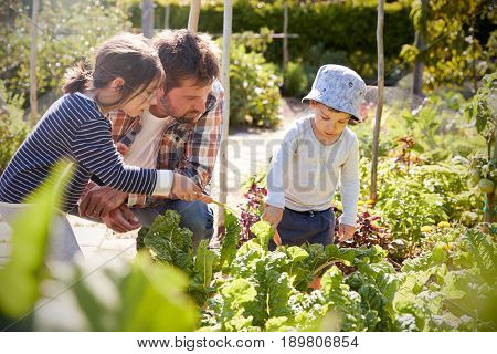 Children Helping Father As They Work On Allotment Together