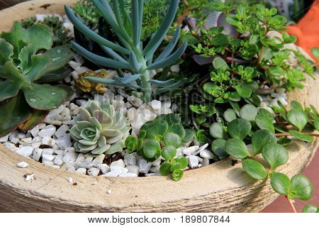 Large stone container with plants and healthy succulents that make up popular Zen garden in home.