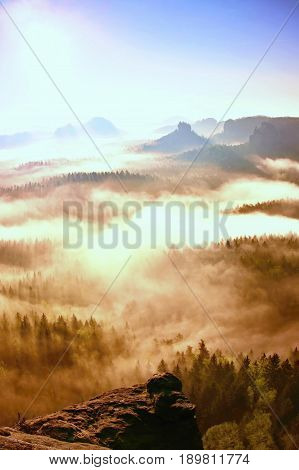 Dreamy Misty Forest  Landscape. Majestic Peaks Of Old Trees  Cut Lighting Mist. Deep Valley Is Full