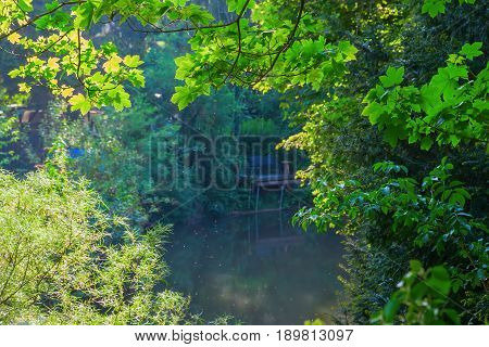 Perspective Between Trees To A Pond