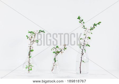 Flowers composition. Apple tree flowers into vases. Scandinavian style