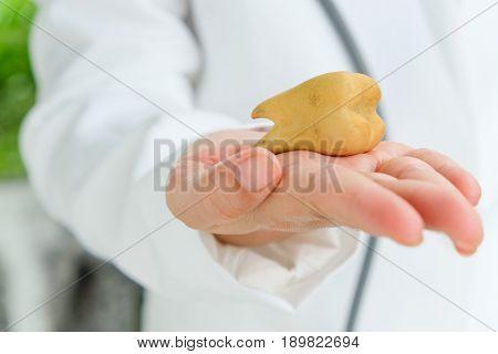 image of dentist holding molar, dental concept