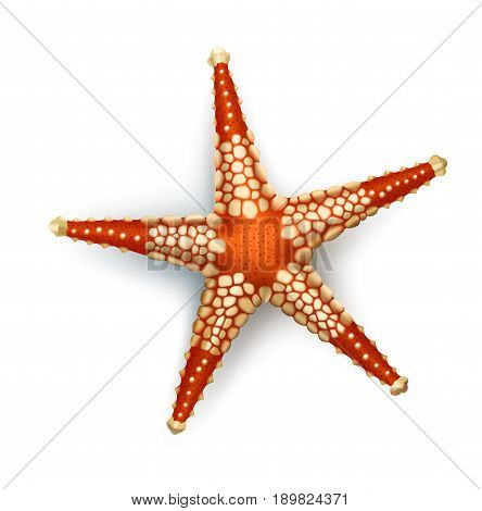 Vector illustration, badges, stickers, starfish in realistic style isolated on white. Print, template, design element