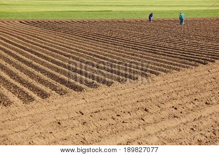 Planting field landscape with ground and green meadow. Rural agriculture