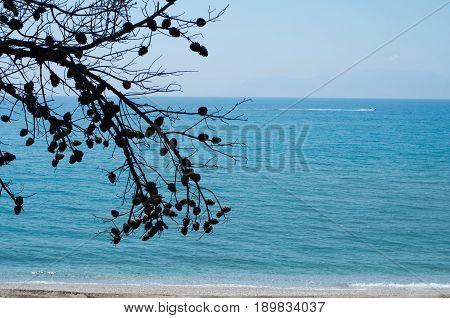 Landscape of pine tree near the sea.