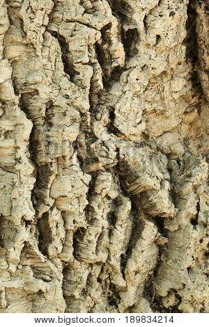Detail of textured cork brown tree trunk bark