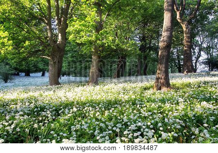 Forest green landscape with tree and white flowers