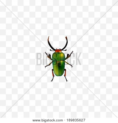 Realistic Beetle Element. Vector Illustration Of Realistic Insect Isolated On Clean Background. Can Be Used As Green, Beetle And Insect Symbols.