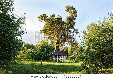 Big oak with white wooden gazebo in park at sunset. State Museum-reserve of A. S. Pushkin - Trigorskoye village Pskov Region Russia.