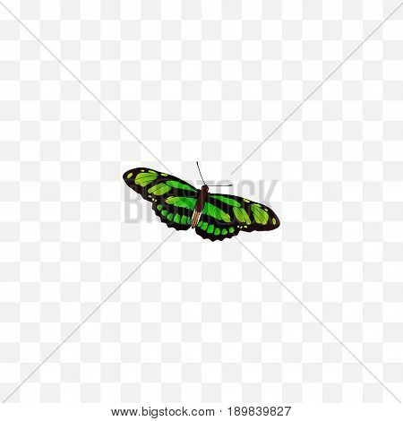Realistic Birdwing Element. Vector Illustration Of Realistic Green Peacock Isolated On Clean Background. Can Be Used As Green, Butterfly And Fly Symbols.