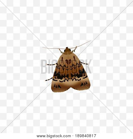 Realistic Moth Element. Vector Illustration Of Realistic Butterfly Isolated On Clean Background. Can Be Used As Butterfly, Moth And Fly Symbols.