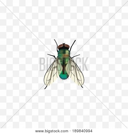 Realistic Wasp Element. Vector Illustration Of Realistic Housefly Isolated On Clean Background. Can Be Used As Jewel, Wasp And Housefly Symbols.