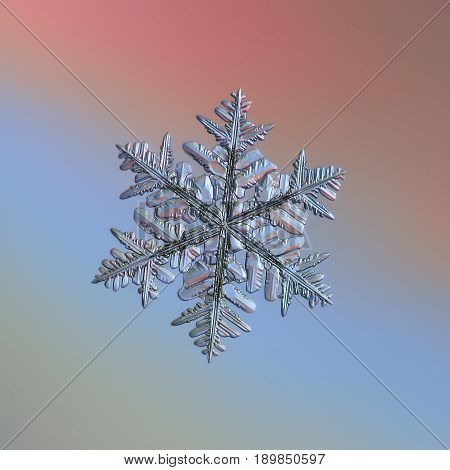 Real snowflake macro photo: large stellar dendrite snow crystal with elegant arms, many side branches and glossy relief surface. Snowflake sparkle on bright gray - blue - pink gradient background.
