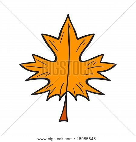 Vector Cartoon Hand Drawn Yellow Autumn Leaf