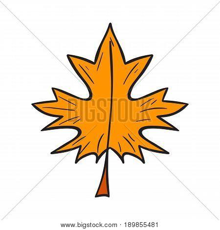 Vector Cartoon Hand Drawn Yellow Autumn Leaf