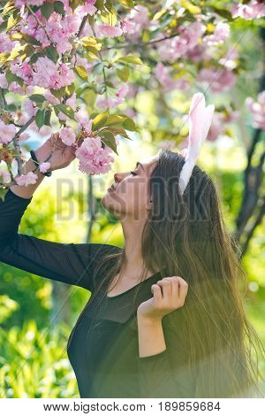 Girl With Rosy Bunny Ears Smelling Sakura Flowers From Tree