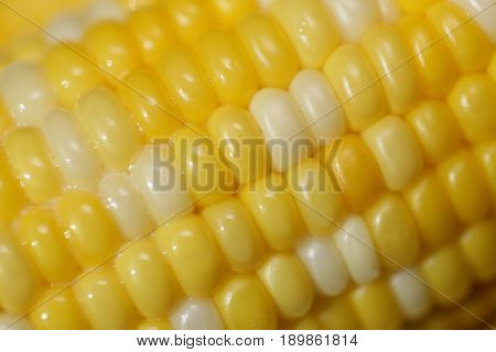 Ear of corn, boiled with melted butter on it, close up, full frame