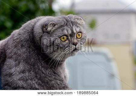 Gray cat looking with his head turned back