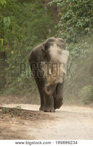 Aggressive Charging Elephant in Jim corbett Dhikala