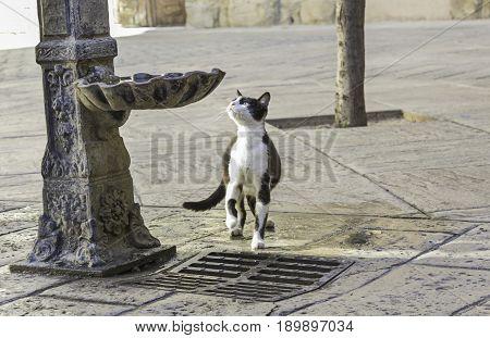 Cat In Source