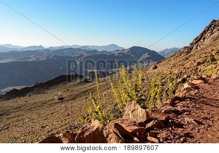 Egypt, Sinai, Mount Moses. Road On Which Pilgrims Climb The Mountain Of Moses And Flowers Along The