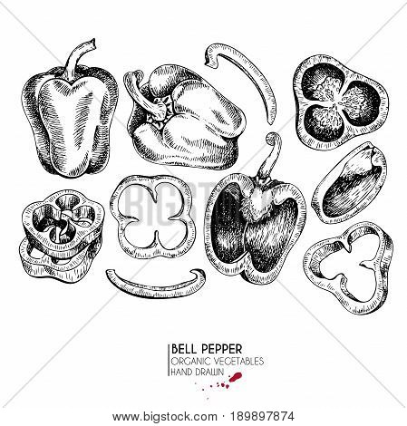 Vector hand drawn set of farm vegetables. Isolated bell pepper rings. Engraved art. Organic sketched vegetarian objects. Use for restaurant menu grocery market store party meal