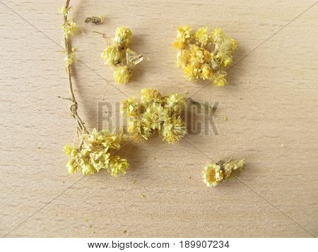 Dwarf everlast, Stoechados flos, for herbal medicine