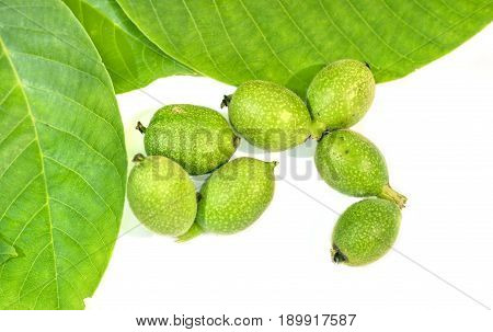 Seven green young walnuts in husks with walnuts leavs on white background