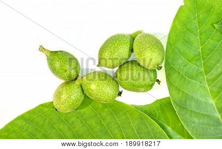 Six green young walnuts in husks with walnuts leavs on white background
