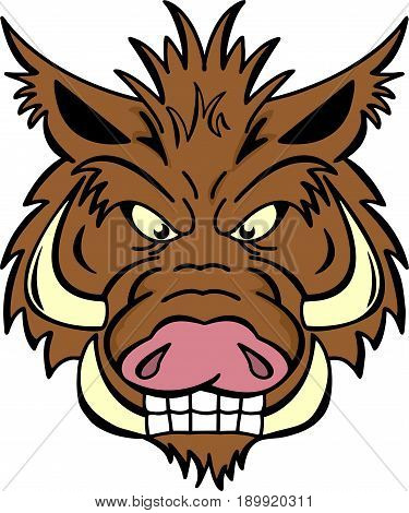 Angry wild boar with very large tusks