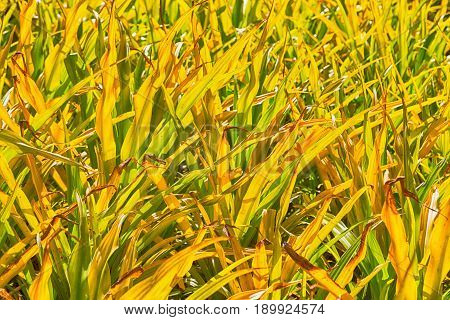 A Fild Of Grass Colse Up Background Abstract