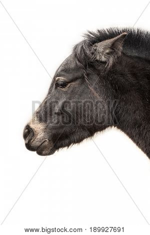 horse head profile isolated on the white