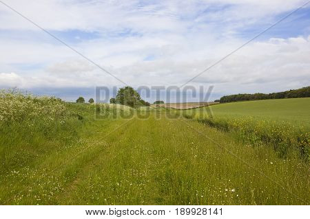 Bridleway And Wildflowers