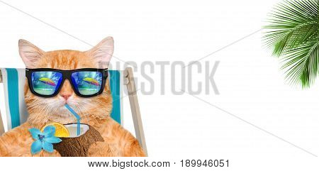 Cat wearing sunglasses relaxing sitting on deckchair and drinks a cocktail. On a white background.
