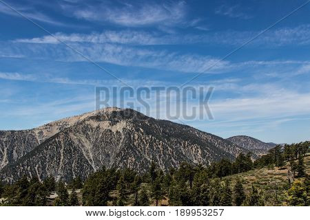 Mt. Baden Powell in the Angeles National Forest. Green Pine trees and blue sky with clouds