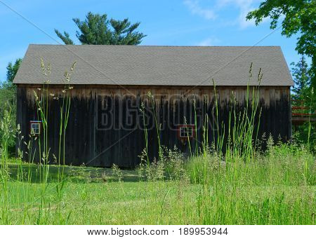 Old wooden barn partially obscured behind tall grasses on an early summer morning