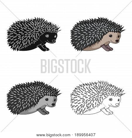 Hedgehog.Animals single icon in cartoon style vector symbol stock illustration .